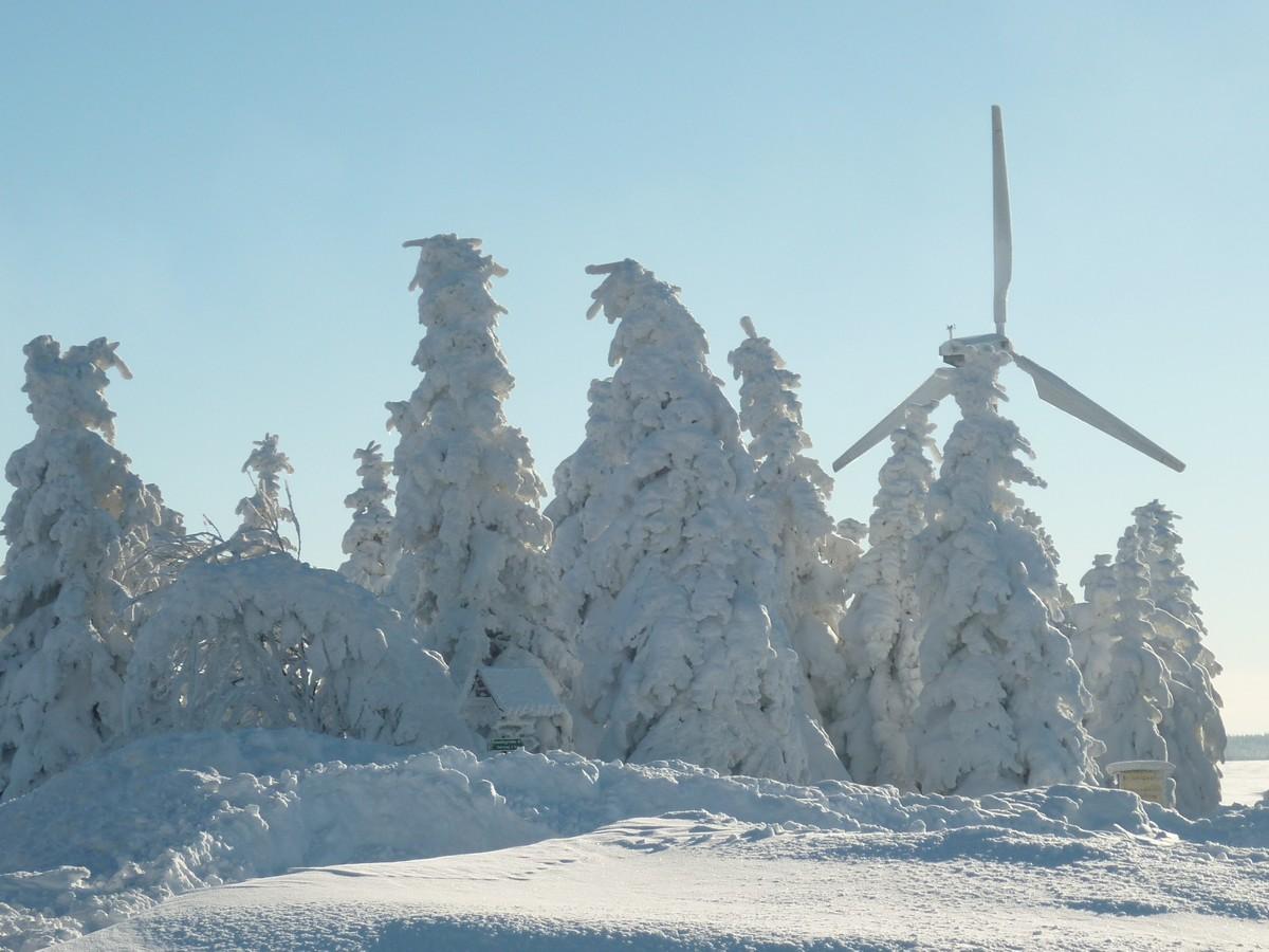 Tief verschneite Baumgruppe am Hirtstein