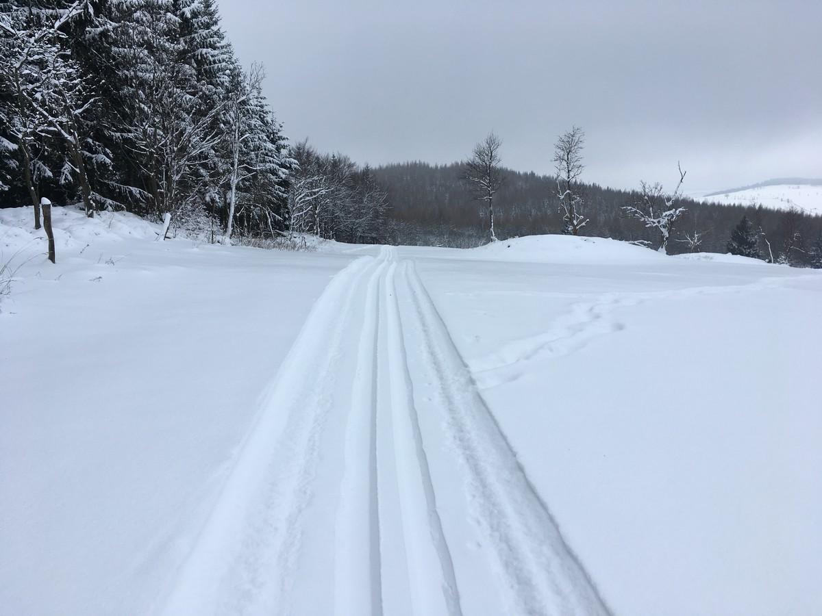Skiwandwerg Zinnwald kurz vor Ende der Loipe unterhalb der Kohlhaukuppe