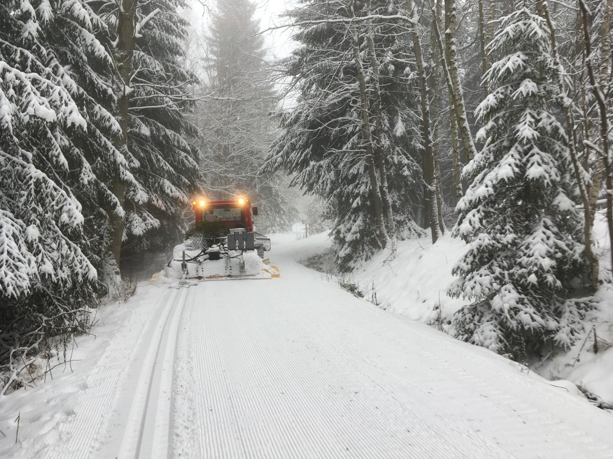 Geloipte Schneisen im Kahleberggebiet oberhalb von Altenberg