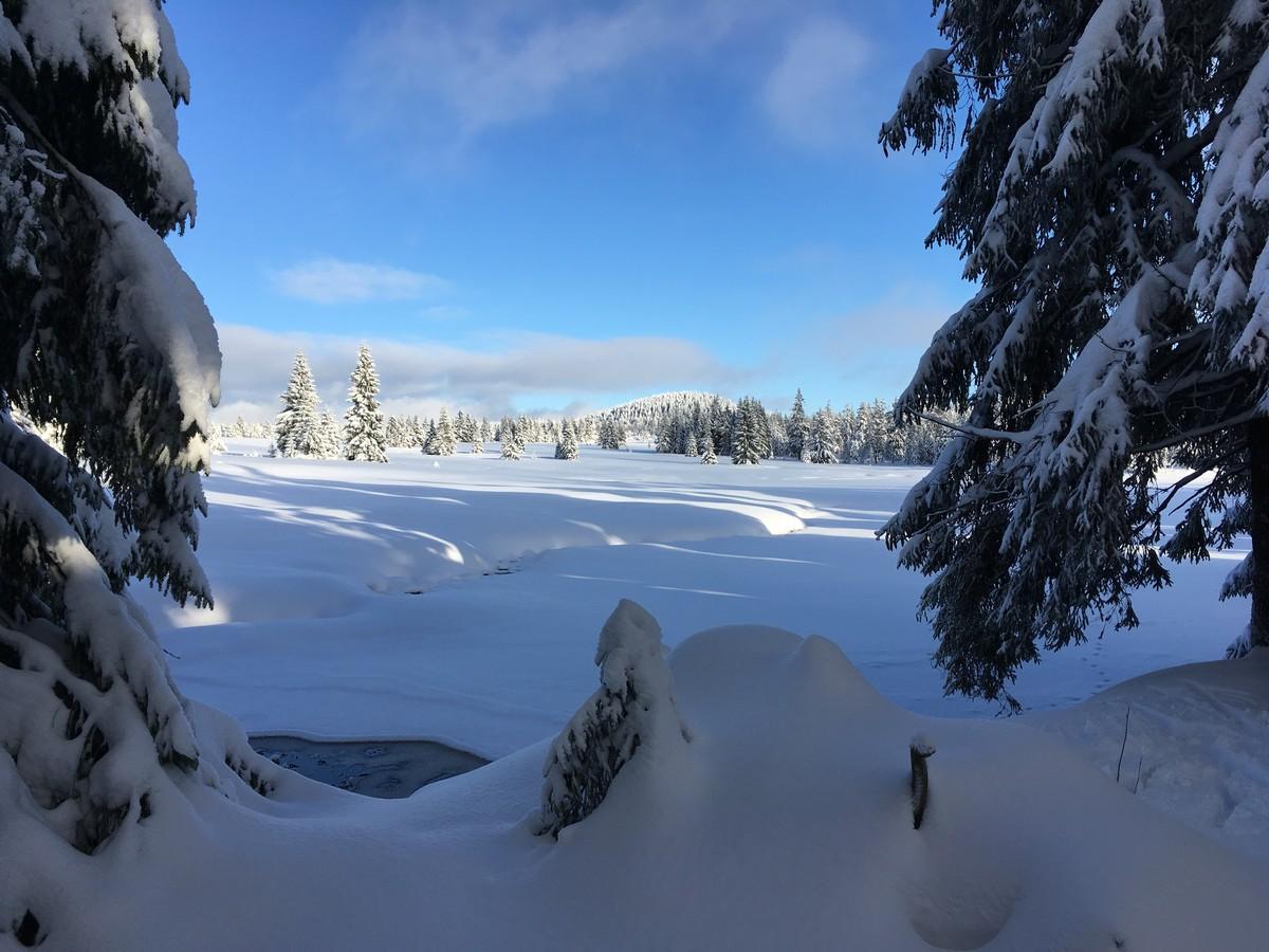 Hochmoor Gottesgab im Winter