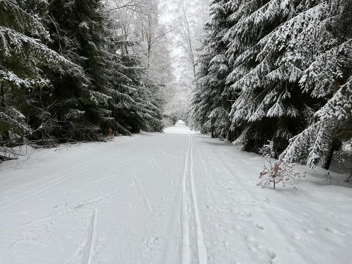 Loipe nahe Grenzübergang Aschberg - Bublava
