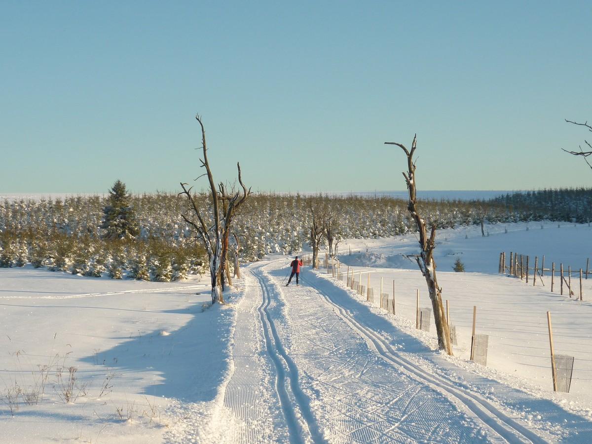 Loipengebiet Dlouha Louka unweit der Grenze bei Holzhau