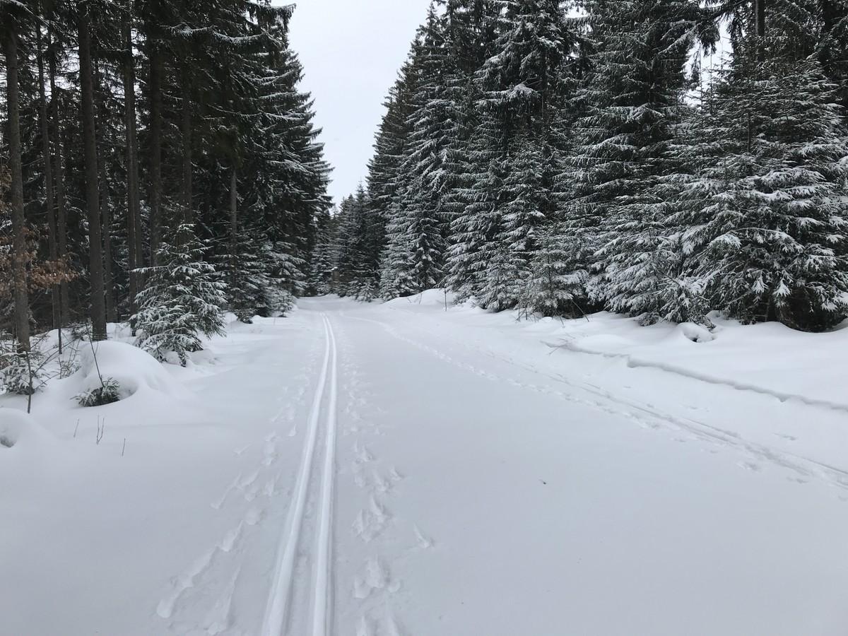 Loipe Eibenstock Richtung Adlerfelsen