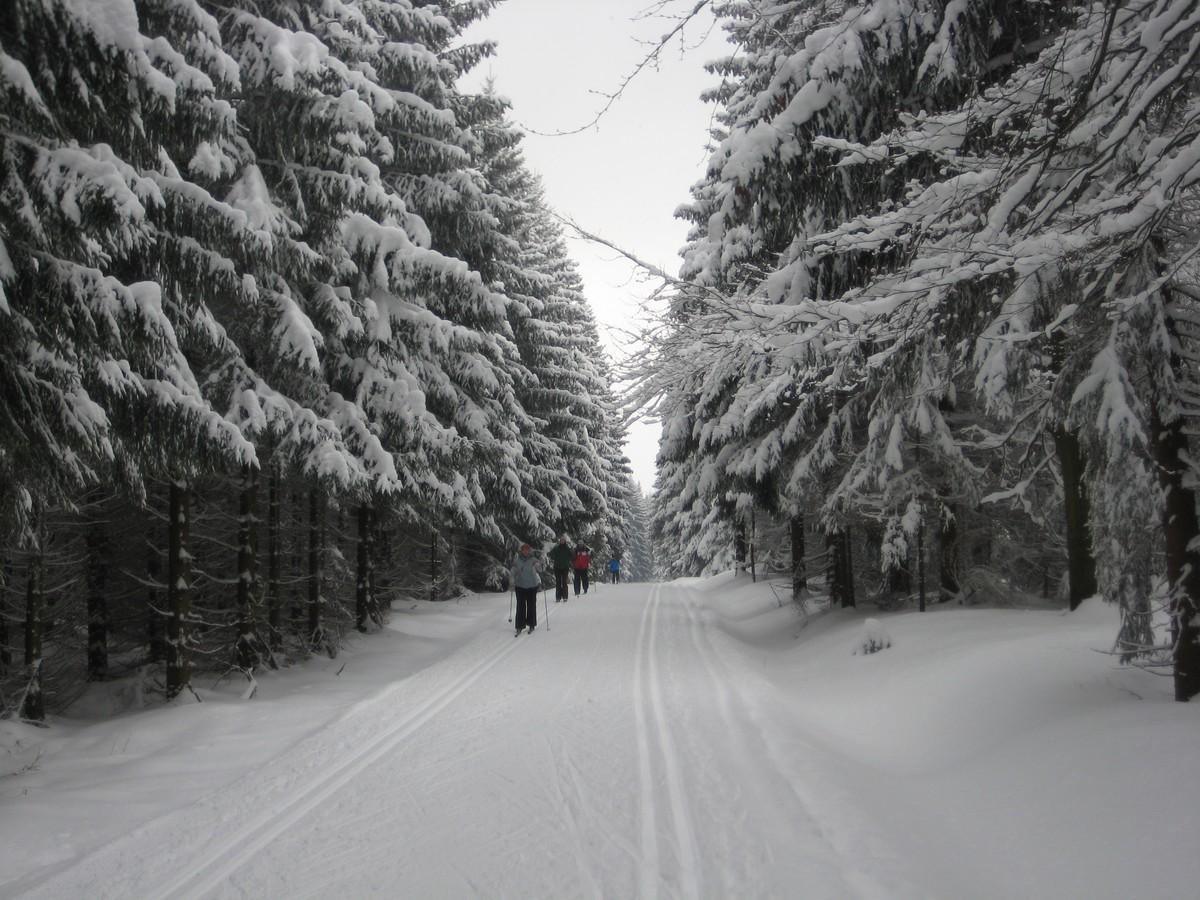 Typische Waldschneise im Geyerschen Wald