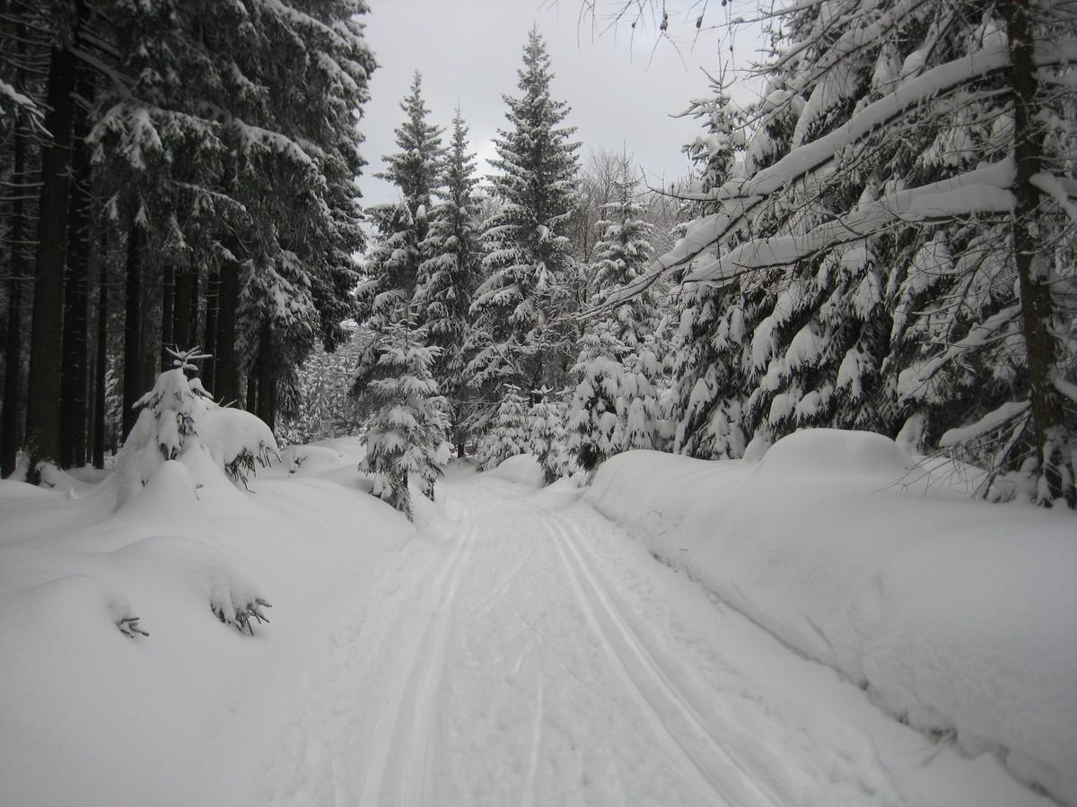Loipe im Geyerschen Wald