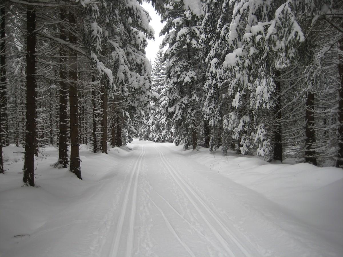 Loipengebiet Geyerscher Wald