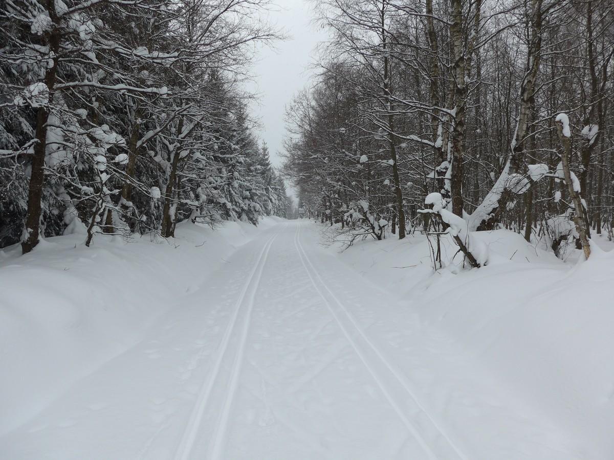 Moorweg im Loipengebiet Holzhau