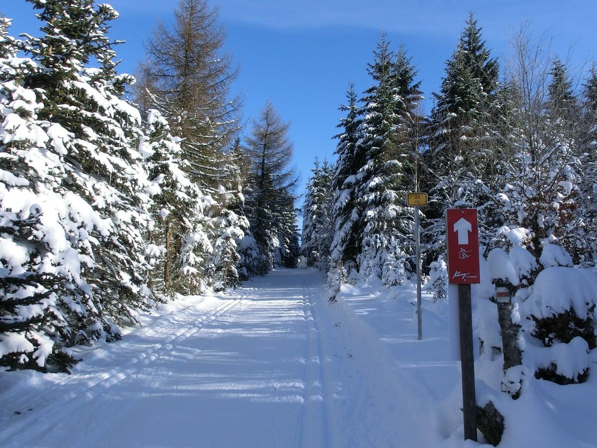 Gelbe Loipe und Skimagistrale bei Kliny