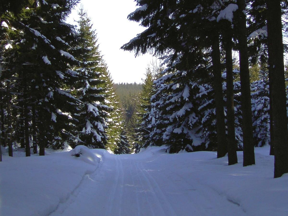 Loipe auf dem Firstenweg bei Neudorf / Siebensäure