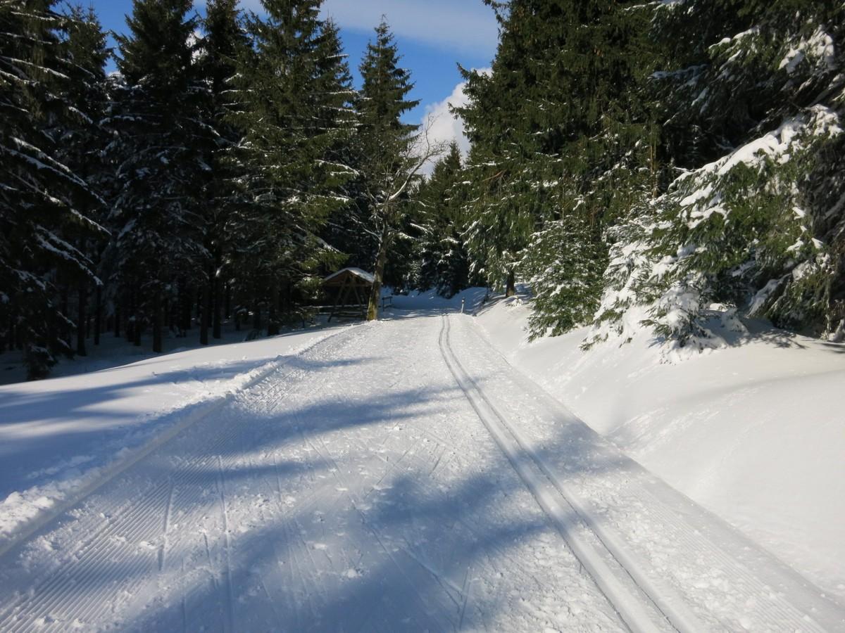 Loipe_Oberwiesenthal12 Rollerbahn