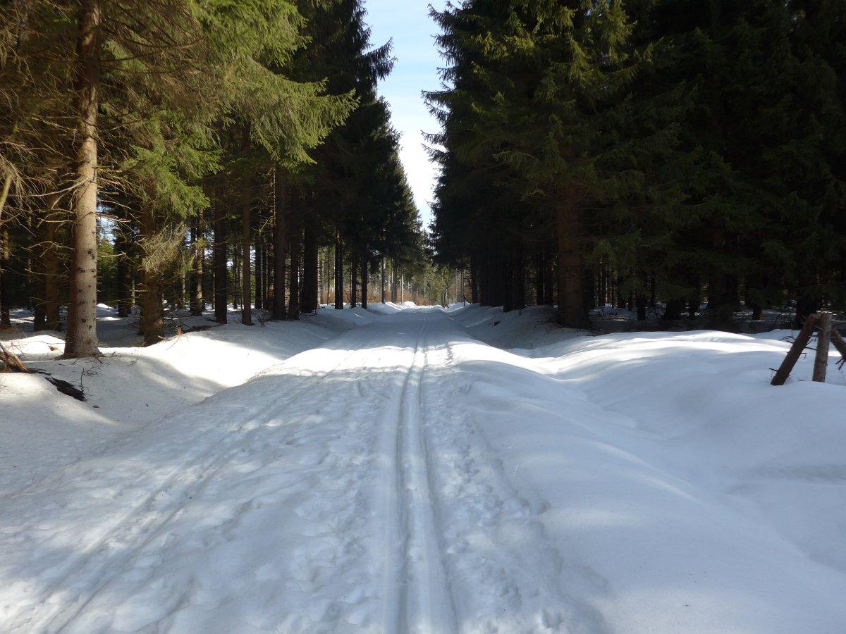 Loipe Rübenau im Kriegwald