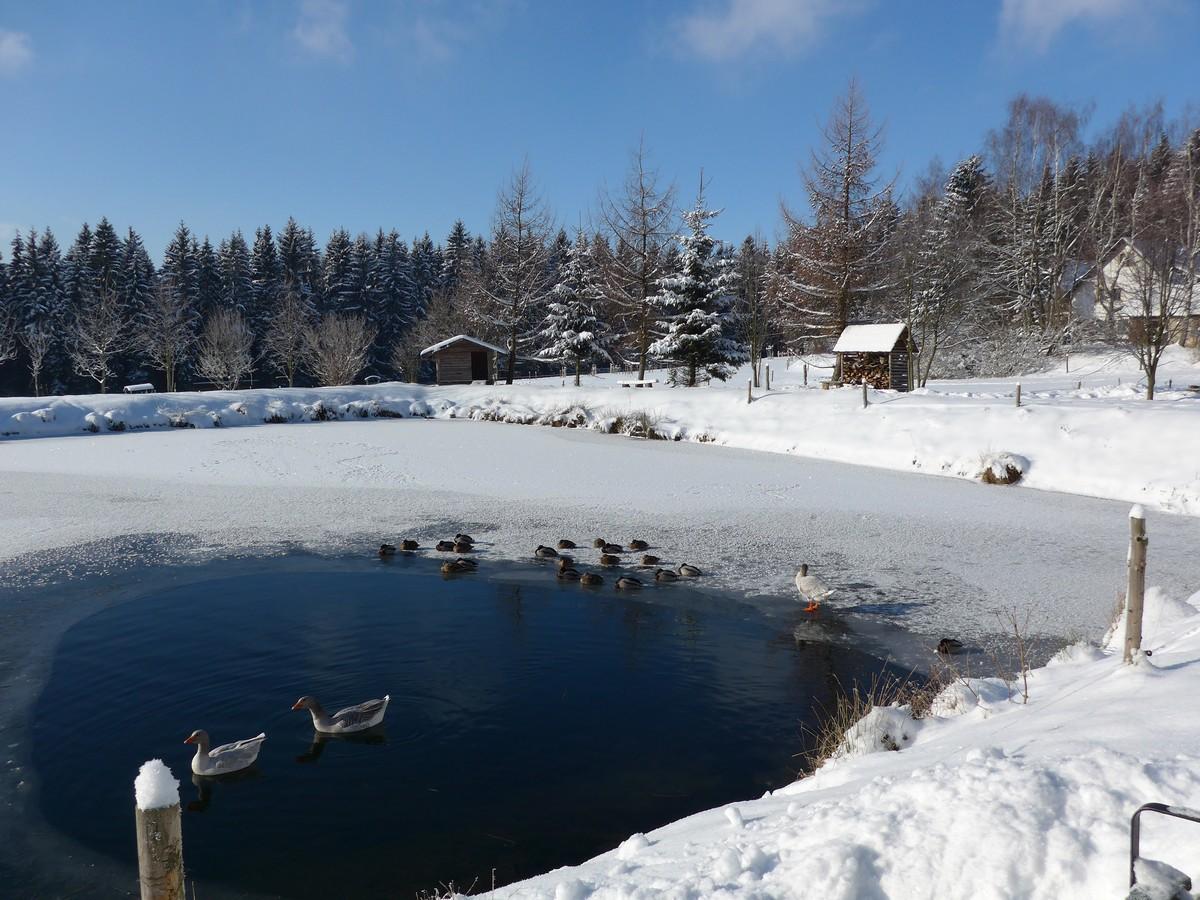 Teich am Kleinen Vorwerk (Mühlholz)