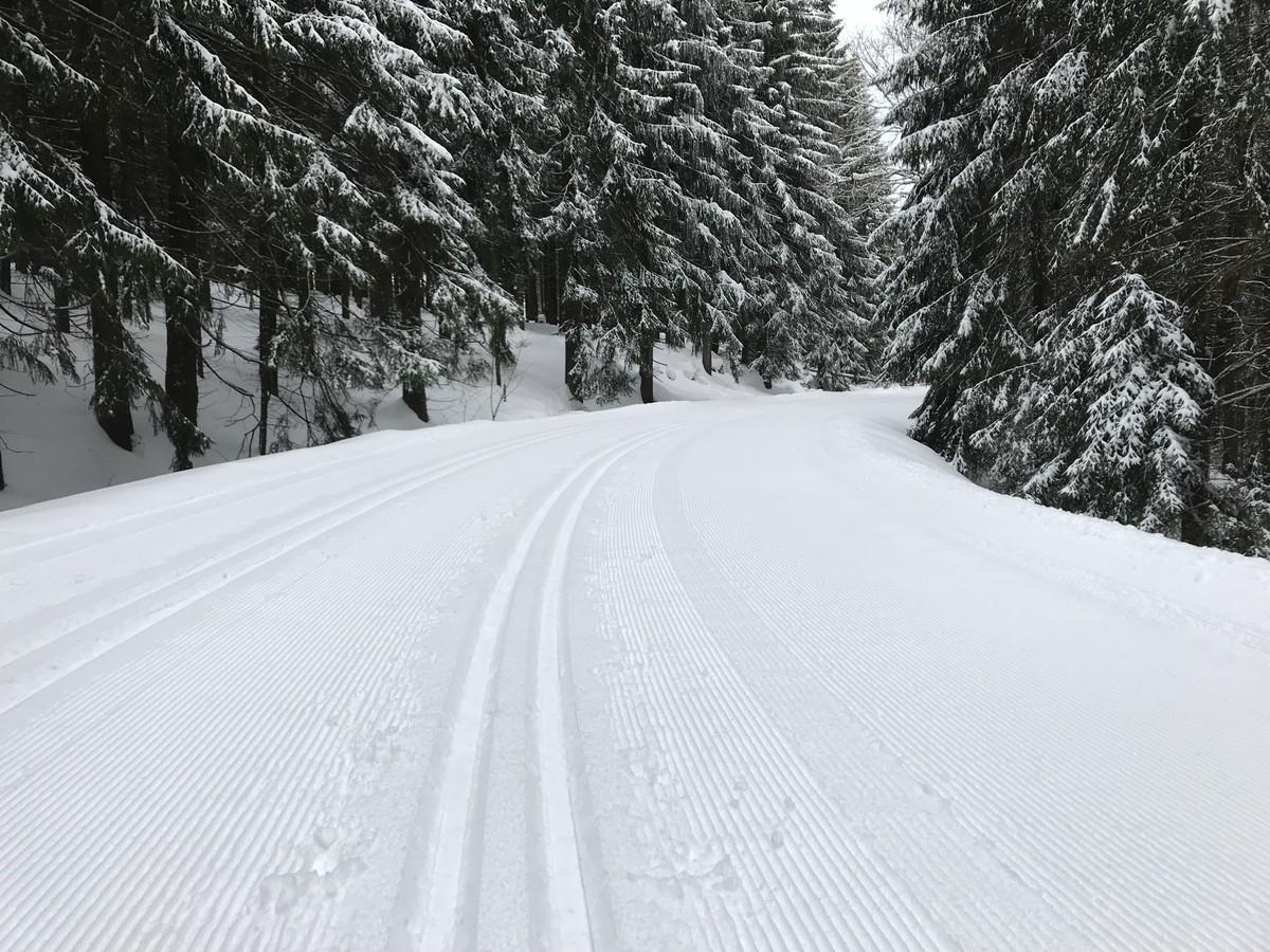 Loipe nach Schnarrtanne auf einem breiten Forstweg