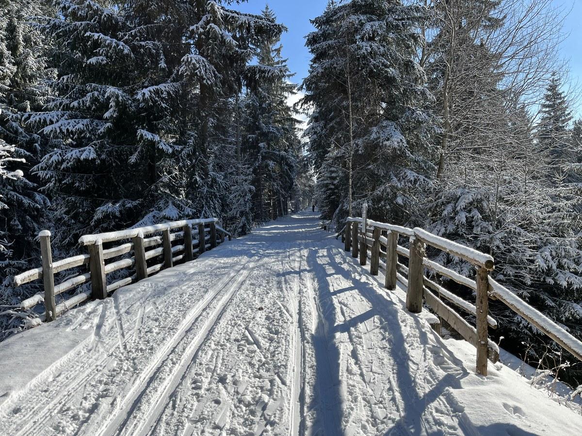 Osterzgebirgsloipe entlang der Grenze im Rauschenbachtal