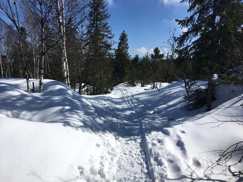 Abfahrt auf einem Wanderweg vom Plöckensteinsee Richtung Nova Pec