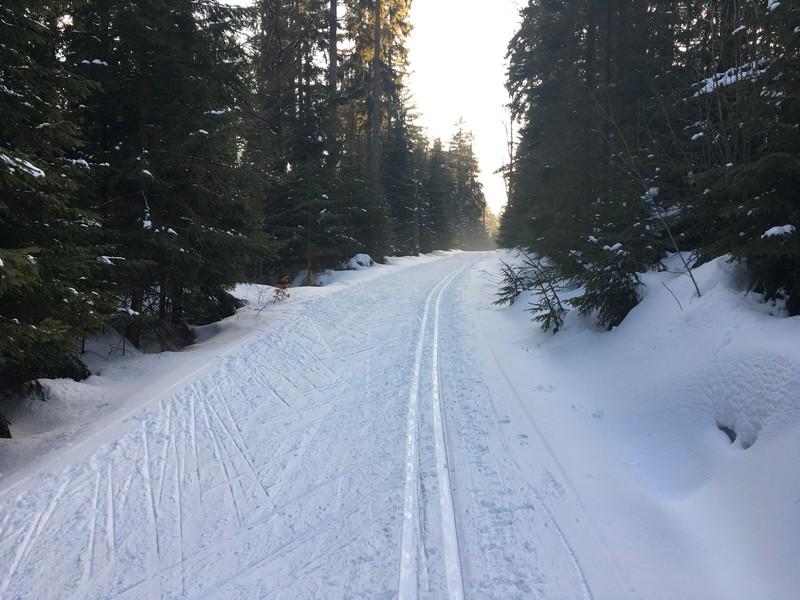 Auf der Bärensteinloipe Richtung Grünwald