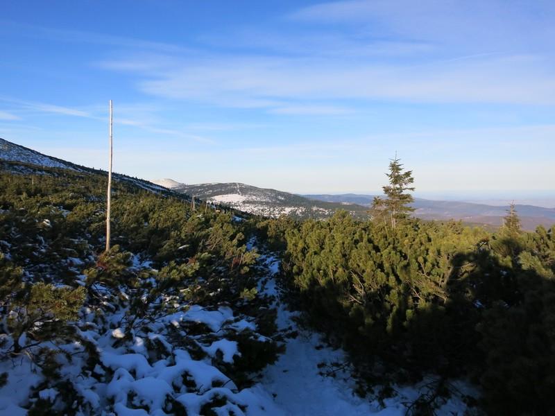 Durchaus schwieriges Durchkommen zwischen den Kiefern auf dem markierten Skiweg